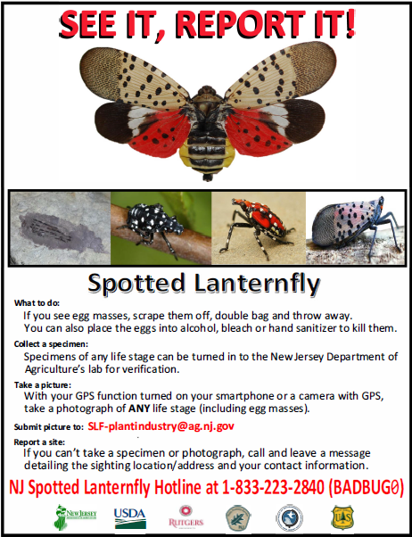 Spotted Lanternfly See It Report It Picture